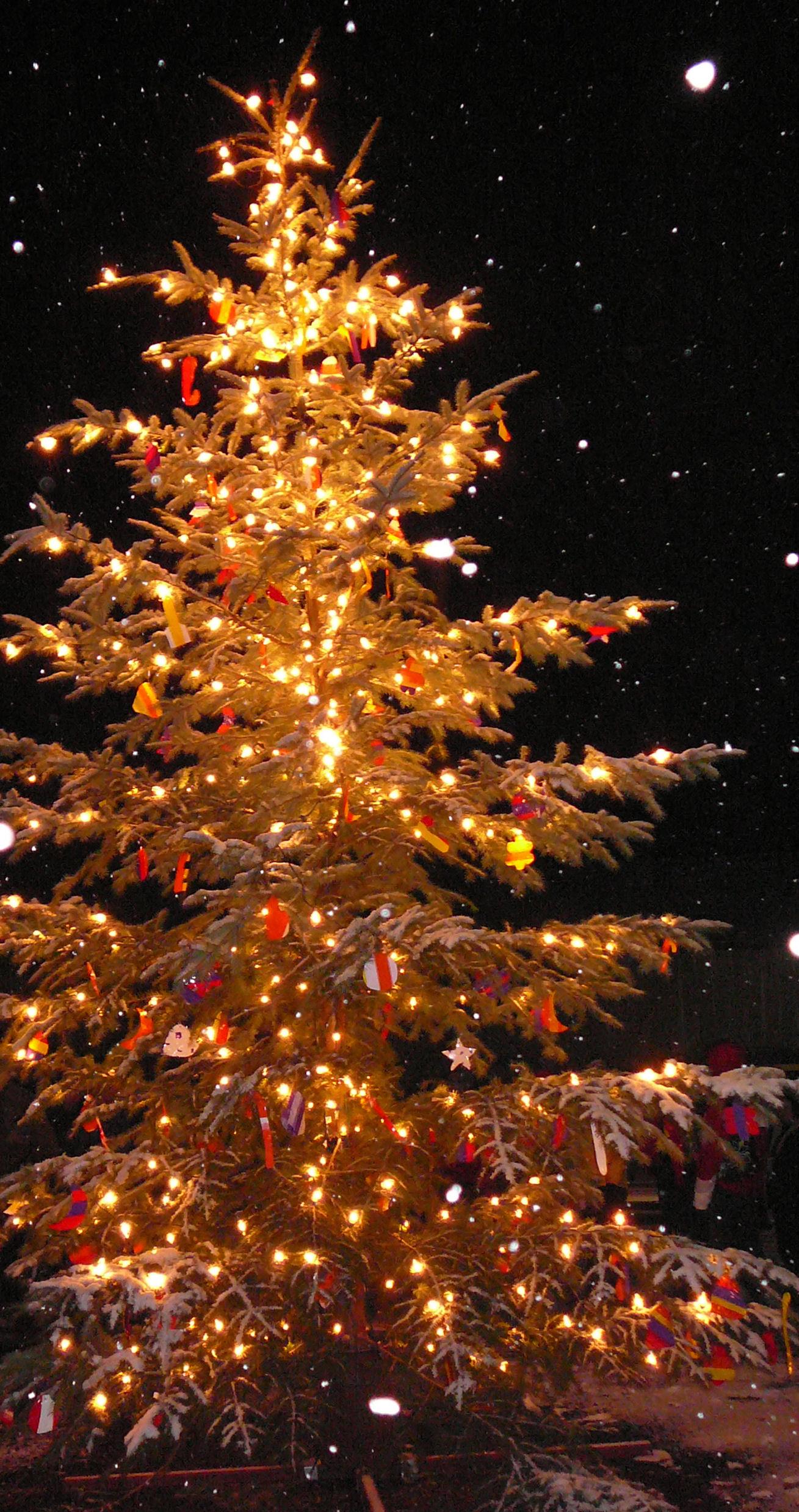Christmas Tree, Oh Christmas Tree! - Powerscourt Garden Pavilion