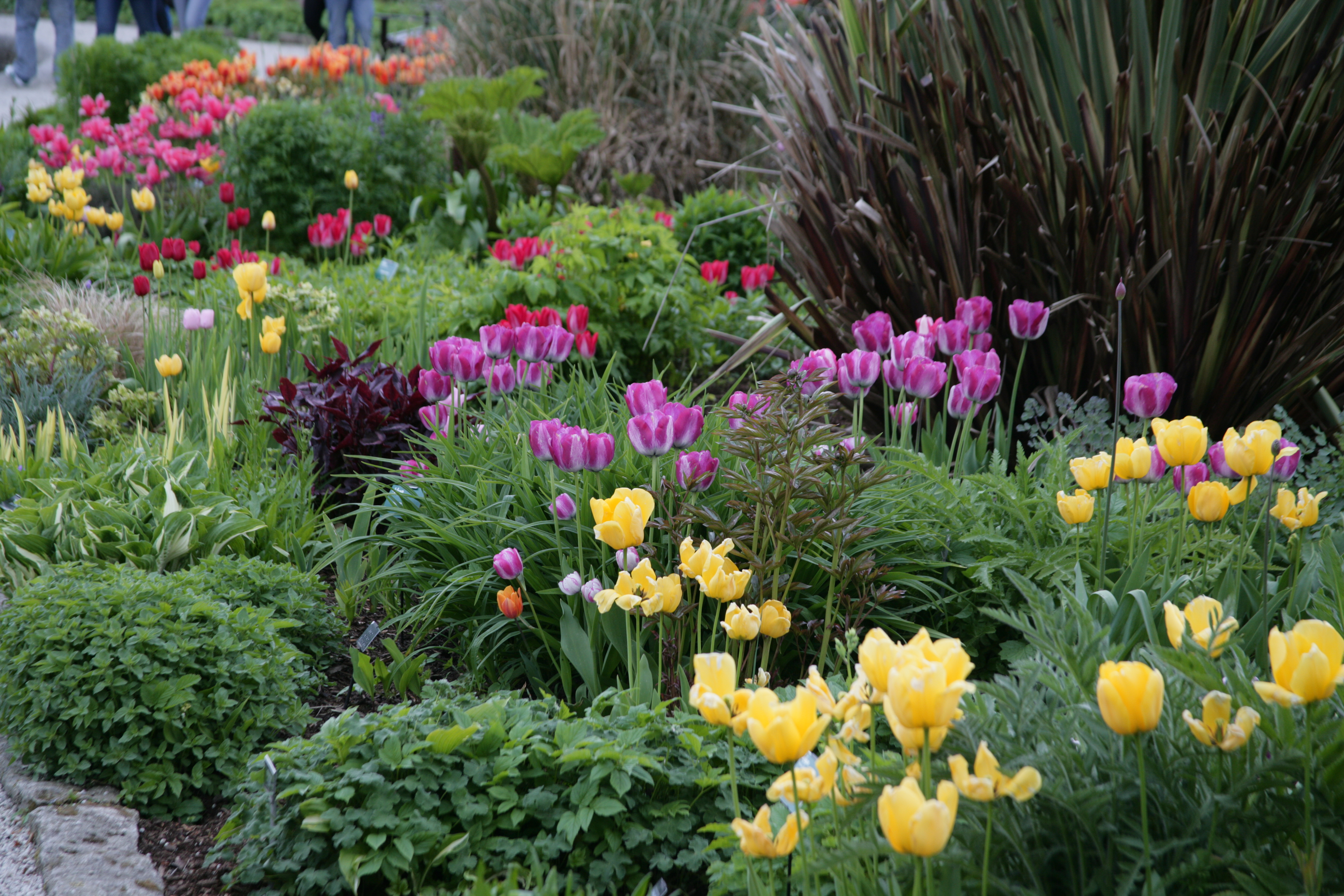 How and when to plant spring bulbs powerscourt garden pavilion herbaceous plants formal planting mightylinksfo